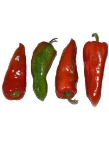 Bell Pepper, Red Conical