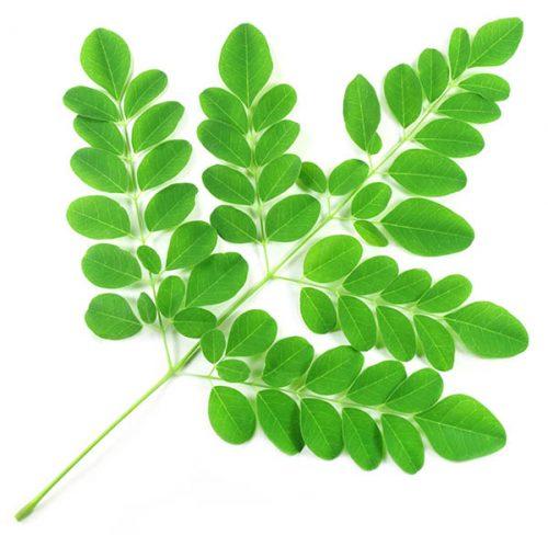 Moringga Leaves
