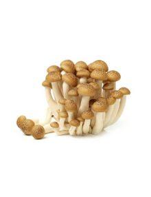 Fresh Mushroom - Shimeji Brown