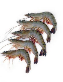 Naturally Farmed Prawn (30)