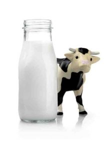 Organic Cow's Milk (480 ml)