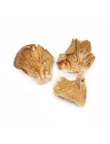 Organic Dried Mushroom - Oyster
