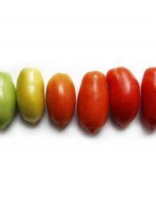 Tomato, Native