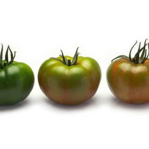 Tomato, Salad